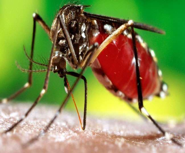 Dengue cases in Delhi are on a surge, with over 100 cases reported yet, Malaria and Chikungunya also on rise