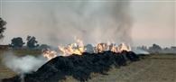चंदनपुर गांव में खुलेआम जली पराली