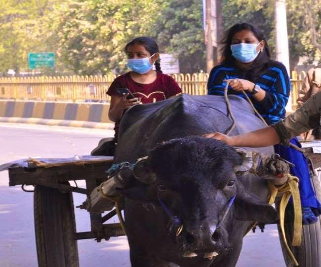 मुजफ्फरनगर में भैंसा-बुग्गी लेकर सड़क पर निकलीं डीएम।