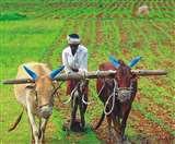 coronavirus: फसल कटाई के लिए किसानों को दिए गए टिप्स, इस तरह करें बचाव