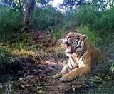 Jharkhand Lockdown : पलामू टाइगर रिजर्व में भी अलर्ट, अमेरिका में बाघ में मिला था कोरोना का संक्रमण