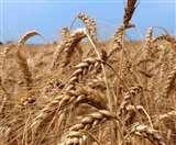 किसानों के लिए खुला 'मेरी फसल-मेरा ब्यौरा' पोर्टल, 19 तक करवा सकते हैं पंजीकरण