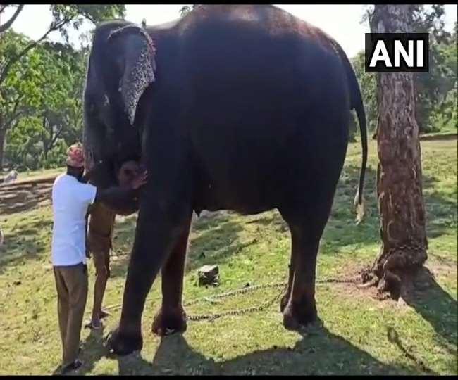 तमिलनाडु के मुदुमलाई टाइगर रिजर्व में 28 हाथियों का कोविड टेस्ट पॉजिटिव आया