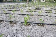 तीन सौ एकड़ में लगेगा ड्रिप इरिगेशन सिस्टम, बचेगा पानी