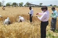 किसानों को चिता, गेहूं जल्दी पहुंचे घर में