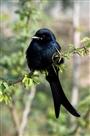लॉकडाउन की खामोशी में गूंजा पक्षियों का तराना