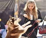 Dog Show: डॉन ने जीता बेस्ट ब्रीड का खिताब, विदेशाें से भी पहुंचे लोग Chandigarh News
