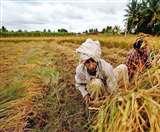 मौसम के बाद अब व्यवस्था की दगाबाजी ने किसानों की रही सही उम्मीदों पर भी फेर दिया पानी