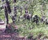 तिमली रेंज में दिखाई दिया 13 हाथियों का झुंड, वन महकमे में मचा हड़कंप