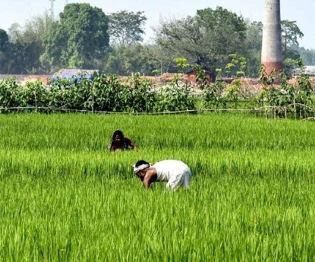 हरियाणा में हिसार के ग्रामीण अंचल की आठ कृषि सखियां