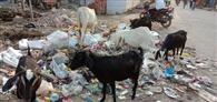 कागजों पर दिखती शहर की सफाई, सड़कों पर दिखता केवल कचरा