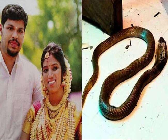 कोबरा से डसवा कर की थी पत्नी की हत्या
