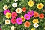 तरह-तरह के रंगों के फूल जो आपकी बगिया की रौनक बढ़ाएंगे