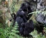 पौधों और जानवरों की 1,840 नई प्रजातियों पर अस्तित्व का संकट, IUCN ने जारी की सूची