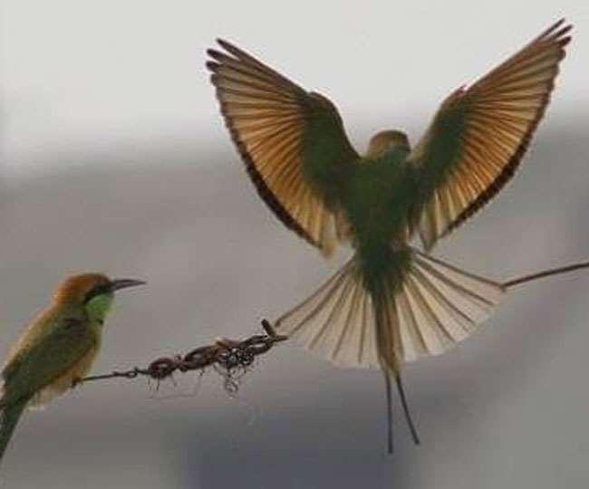पक्षी शीशे पर हमला करते हैं, कांच पर चोंच से वार करते हैं जिससे उन्हें चोट लगती है।