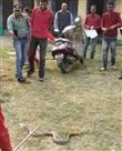 खंडहरनुमा महाविद्यालय में सांपों का है बसेरा