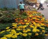 सर्दी आते ही खिलखिलाने लगे फूलों के बाग, प्रतिदिन बिक रहे ढाई हजार पौधे