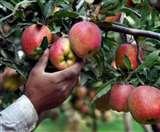 किसानों की आर्थिकी का मुख्य आधार बनेगा सेब उत्पादन, रुकेगा पलायन