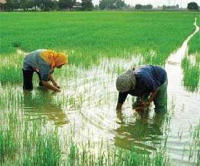 अध्ययन में पाया कि चावल की तुलना में गेहूं के साथ जोखिम दोगुना से अधिक मात्रा में बढ़ गया है।
