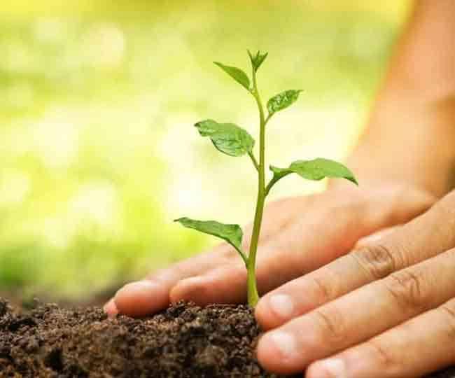 Shraddha Karma 2020: पितृ पक्ष में पेड़-पौधे लागना होता है अच्छा, जानें किस मृत सदस्य के लिए लगाएं कौन-सा पेड़