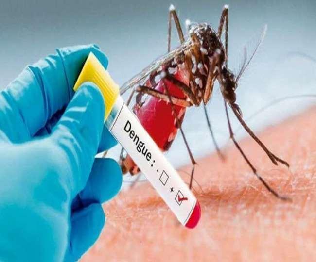 देश भर में डेंगू फीवर के मामलों को लेकर ताजा अपडेट।(फोटो: दैनिक जागरण)