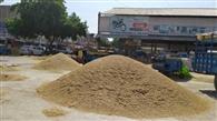 नरमे का भाव गिरा, दीपावली के बाद आएगी तेजी, मंडी में आज से धान की आवक होगी तेज