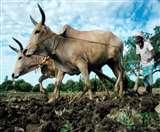 मुख्यमंत्री किसान एवं सर्वहित बीमा योजना में खत्म होगा बीमा कंपनियों का दखल, अब डीएम करेंगे निगरानी