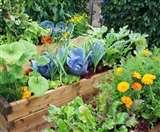 Kitchen Garden : किचन गार्डेन : सरकारी स्कूली बच्चों को मिडडे मील में मिलेगी ताजी, मौसमी सब्जियां Prayagraj News