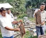 शहद से जीवन में खुशहाली की मिठास, इटली की मधुमक्खी 'मेलीफेरा' के चलते मुजफ्फरपुर में बढ़ा उत्पादन Muzaffarpur News