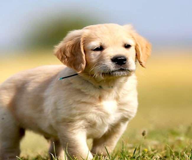 15 हजार का कुत्ते का पिल्ला, 66 लाख देने के बाद भी नहीं मिला। इंटरनेट मीडिया