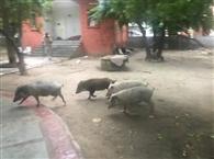 सुंदरीकरण किए गोलबाग पार्कअब हैं जानवरों और नशेड़ियो का अड्डा