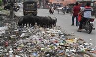 शहर में साफ-सफाई का अभाव, लगा है कचरे का अंबार
