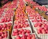 कुल्लू से कोल्हापुर भेजा सेब से लदा ट्रक गायब, चालक और परिचालक भूमिगत