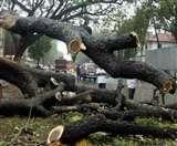 आरे कॉलोनी के बाद, गुजरात में भी चौंका देने वाला है पेड़ों की कटाई का मामला