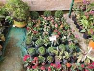 घर को आकर्षक लुक देने के साथ एयर प्यूरीफायर का कर काम रहे इंडोर पौधे