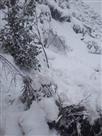 मल्हार में भी बारिश-बर्फबारी से बिजली गुल