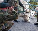 जाने क्यों कमांडर ढिल्लन ने किया कुत्ते मेनका को सैल्यूट, तस्वीर वायरल