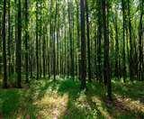 वन एक्ट के प्रस्तावित संशोधनों में उत्तराखंड वन पंचायतों का जिक्र तक नहीं