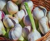 Benefits Of Eating Garlic : लहसुन खाने से इस गंभीर बीमारी का खतरा होता है कम, जानिए इसके और फायदे