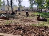 कान्हा उपवन : महाराज गंज में कार्रवाई से बरेली के अफसरों में मची खलबली, जानिए क्यों Bareilly News