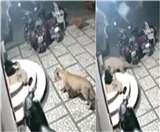 Video: घर के बाहर सो रहे कुत्ते की तरफ बढ़ा तेंदुआ, किया अटैक और फिर...
