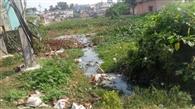 गंगटा तालाब का जीर्णोंद्धार नहीं होने बढ़ा प्रदूषण