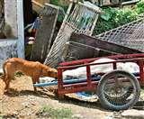 मानवता शर्मसार: अस्पताल में लावारिस शव को नोंच रहे थे कुत्ते, घटना जानकर रो पड़ेंगे आप