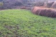 मौसम की मेहरबानी बढ़ा सकती है गेहूं व नकदी फसलों की पैदावार