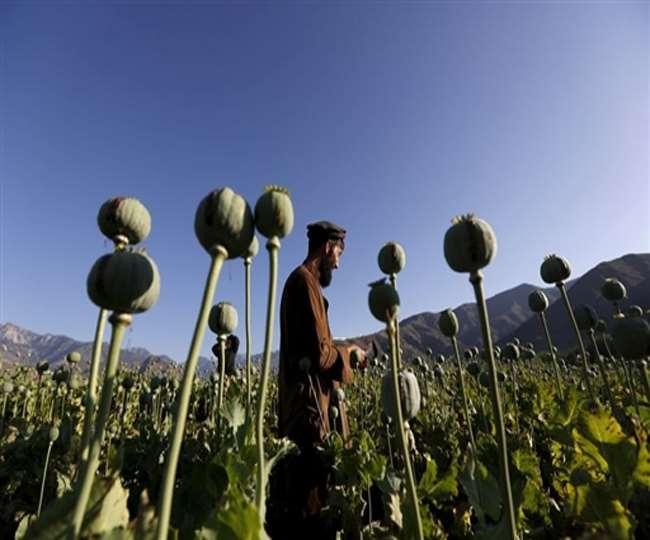 विकास की दौड़ में हमेशा पीछे रहा है अफगानिस्तान