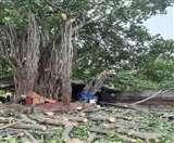 वाह! 150 साल पुराना बरगद का पेड़ काट रहा था ठेकेदार, लुधियाना के लोगों ने यूं बचा लिया Ludhiana News