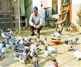 कबूतरों की उड़ान सरवण की पहचान, जालंधर के लाल ने देश-विदेश में बढ़ाया भारत का मान