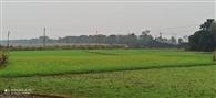 बारिश से जन-जीवन बेपटरी, रबी फसलों को नुकसान