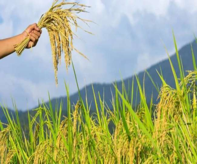 PM Fasal Bima Yojana: Farmers Should Enroll In This Scheme Before Last Date