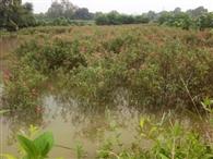 बाढ़ में डूबे खेत, ठप हुआ फूलमंडी में कारोबार